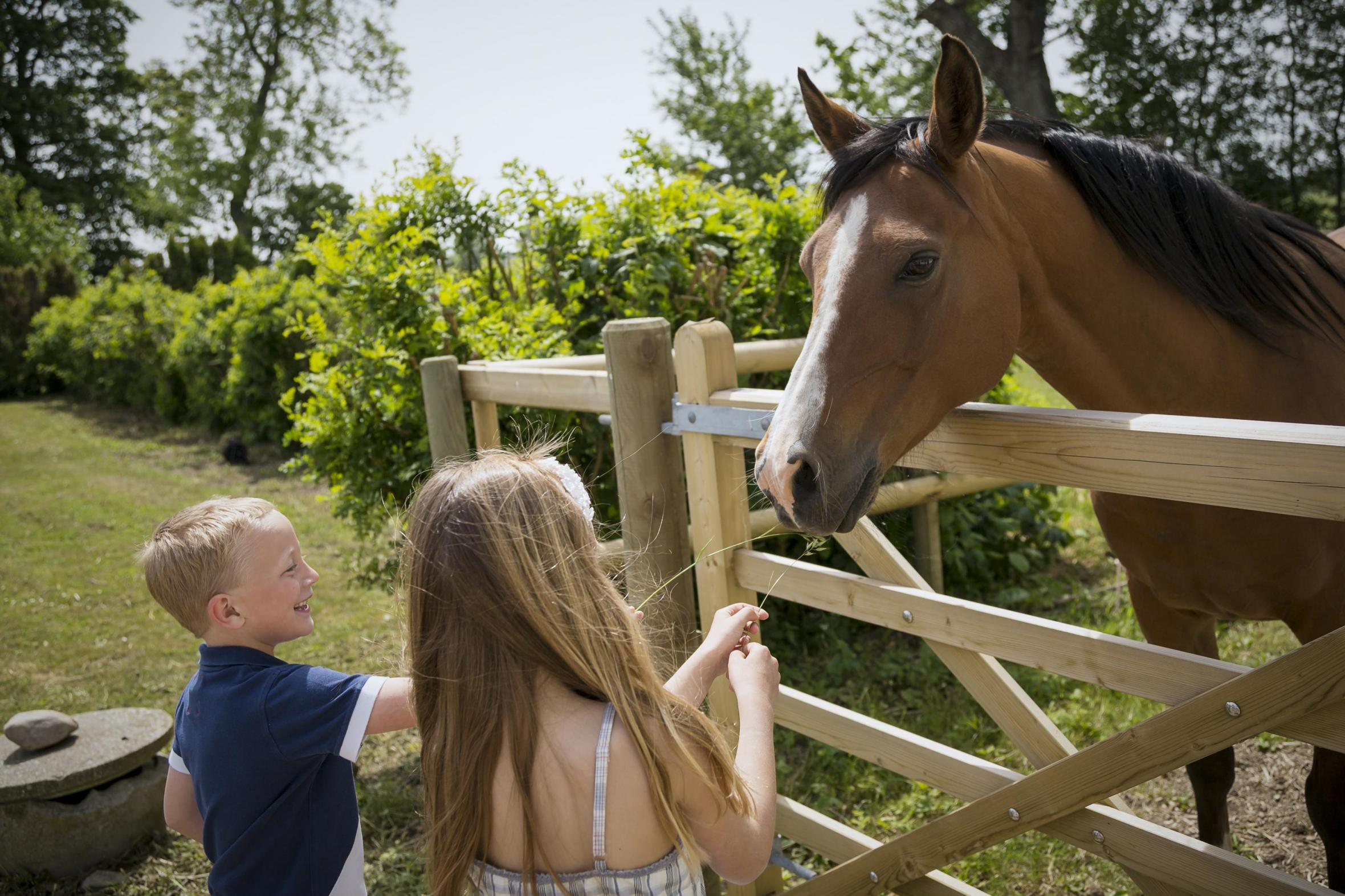 Children and horse