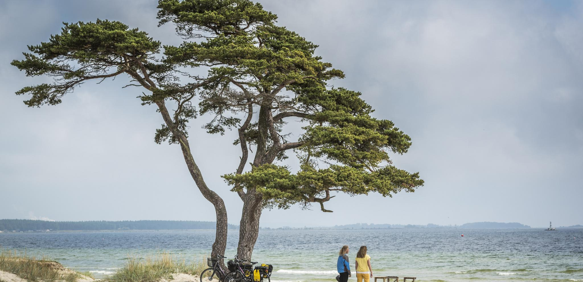 Tappet beach near Ahus with pinetree and biking women