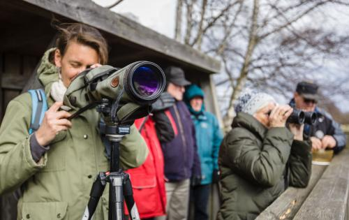 Birdwatchers in Skåne