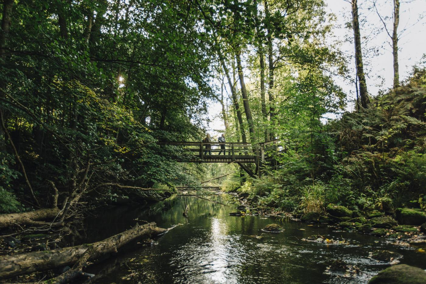 Bridge over Verkesjön © Mickael Tannus
