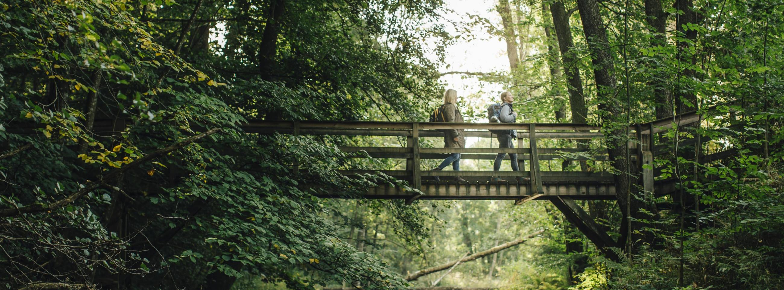 Hiking on the Skåneleden trail