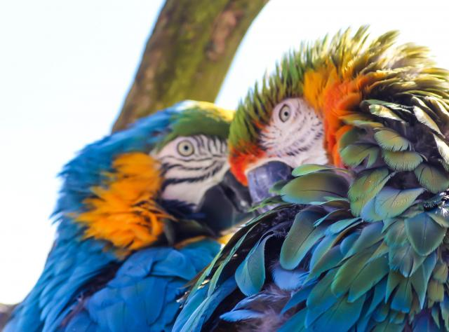 Parrots at Ystad Animal Park © Susanne Nilsson