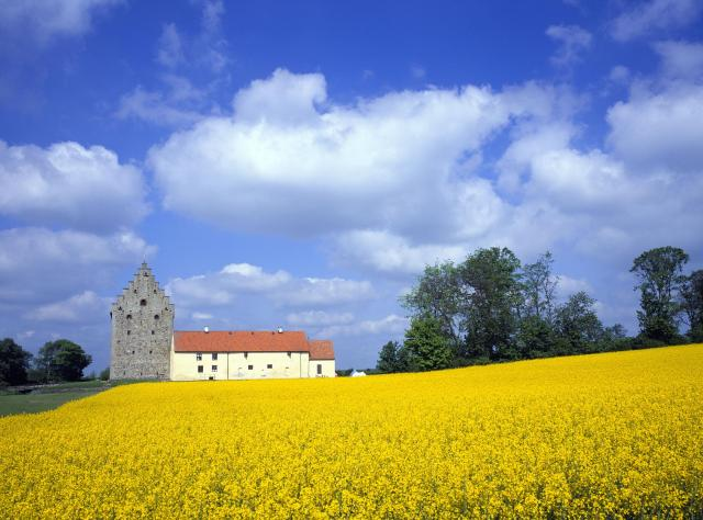 Glimmingehus and the rapeseed fields © Birger Lallo