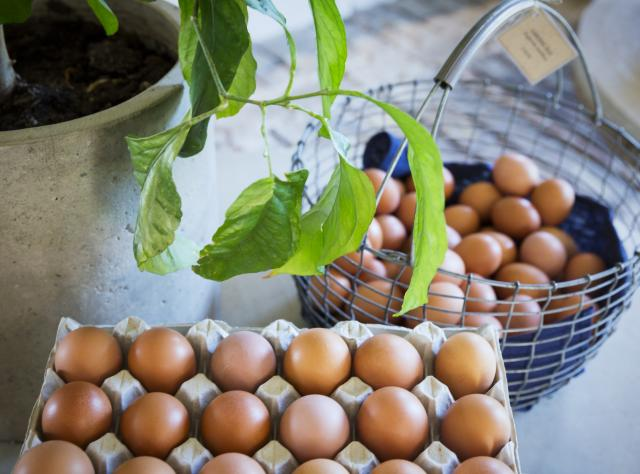 Brown eggs in a package and basket with a green plant next to it