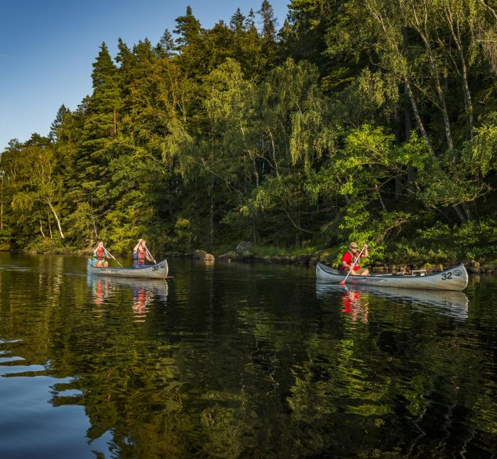 Three people paddling canoes on a lake next to a forest.