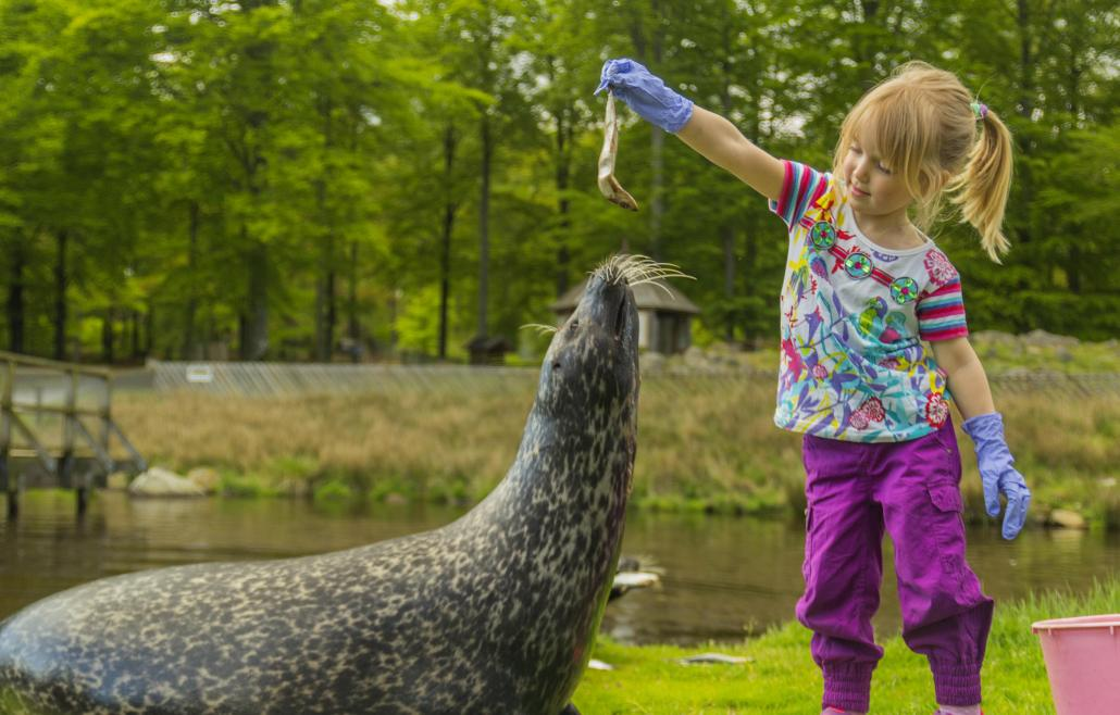 Skånes Animal Park